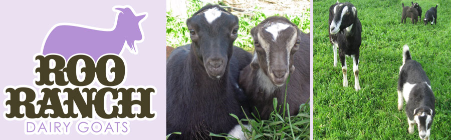 Roo Ranch Dairy Goats